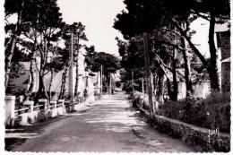 Carnac - Avenue Miln - Carnac