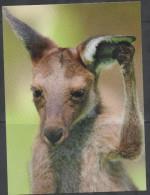 AUSTRALIA  , 2015 ,MNH, NATIVE ANIMALS, KANGAROOS , PREPAID POSTCARD, NICE POSTAL STATIONERY, - Other