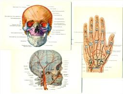 Human Body SKULL CRANE Hand Quantity Postcards 1980'ies 3 Postcards Unused - Gesundheit