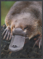 AUSTRALIA  , 2015 ,MNH, NATIVE ANIMALS, PLATYPUS , PREPAID POSTCARD, NICE POSTAL STATIONERY, - Other