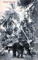 Greetings From CEYLON Urwald Elefant Tigerjagd Karte Um 1900 - Sri Lanka (Ceylon)