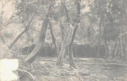 Herd Of Wild Elephant In Jungle  Très Mauvais état / Bad - Sri Lanka (Ceilán)