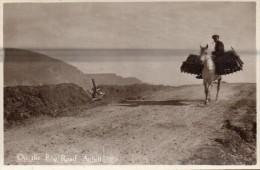 On the Bog Road - Achill  -  Co.Mayo   donkey