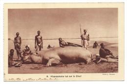 HIPPOPOTAME TUE SUR LE CHARI -Tchad -Afrique -Anim�e, chasseurs