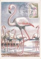 CARTE POSTALE PREMIER JOUR / ANNEE EUROPEENNE DE LA NATURE - FLAMANT ROSE - 21 MARS 1970 - Cartes-Maximum