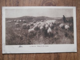 39603 POSTCARD: AGRICULTURE: A. MAUVE. Sheep In The Dunes. - Farms