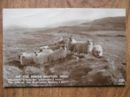 39604 POSTCARD: AGRICULTURE: On The Bonnie Scottish Hills. - Farms
