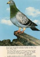 Carte GUERRE 14/18 Le Dernier Pigeon Du Fort De Vaux - Guerre 1914-18