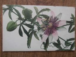 39642 POSTCARD: FLOWERS. - Unclassified