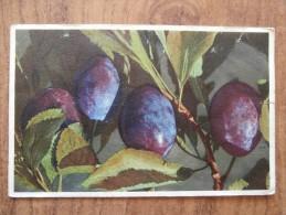 39645 POSTCARD: Prunus Domestica L.   Zwefschge / Pruneau / Damson / Pruno. - Unclassified