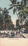 INDIA - BOMBAY, A PALM GROVE - India