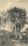 Dahomey-Palmiers A Huile A Plusieurs - Dahomey