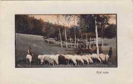 NEL VERDE Schafhirte, Ital.Künstlerkarte Um 1920 - Viehzucht