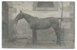 "COLOMBIÈRES (Calvados) - Cheval De Course ""LILI"" 1912 - Carte Photo - Chevaux"