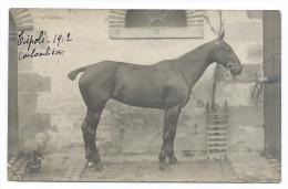 """COLOMBIÈRES (Calvados) - Cheval De Course """"TRIPOLI"""" 1912 - Carte Photo - Chevaux"""