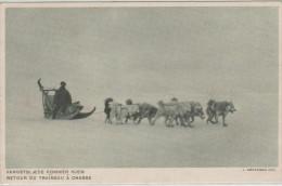 GROENLAND, Retour Du Traineau à La Chasse, Animée - Groenland