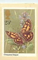 Réf : B-15-297 : PAPILLON CHEQUERED SKIPPER - Papillons