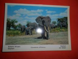 B640 Elefante Africano No Viagg. - Elephants