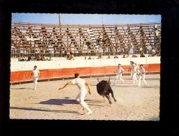 TAUREAUX : Lot X2 Course De Vachette Les Razetteurs + Une Abrivade En Camargue ( Taureau Bull Bullfight Bullfighting - Corrida