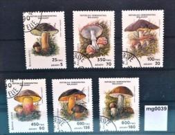 mg0039 Pilze, mushrooms, Hexen-R�hrling, Birkenpilz, Gei�pilz, Madagaskar 1990