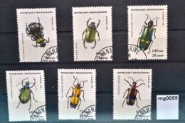 mg0059 K�fer, beetles, Insekten, insects, Riesenk�fer Prachtk�fer, Madagaskar 93