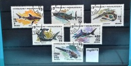 mg0078 Fische, fishes, Haie, sharks, Madagaskar 1993