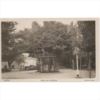 SRATPA2303-LFT6958 .Tarjeta Postal DE SORIA.Casas,plantas.EL ARBOL DE LA MUSICA En El Parque De Soria - Soria