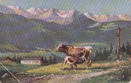 SWITZERLAND - Chocolat Cailler - Advertising Postcard 1927 - Sin Clasificación