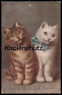ALTE POSTKARTE KATZEN SIGN. SOPHIE SPERLICH MÜNCHEN 4.4.44 Katze Cat Chat Cats Chats Cpa Postcard AK Ansichtskarte - Gatti