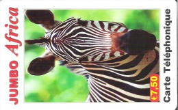 France - Jumbo Africa - Zebra - France