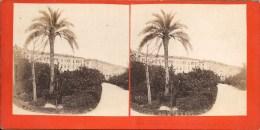 Photo Stéréo - FRANCE - NICE : Palmier Du Jardin Des Plantes - Photos Stéréoscopiques