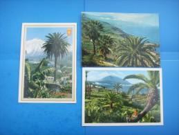 55)  Iles Canaries :  El Teide : Recto Verso :  3 Cartes - Tenerife