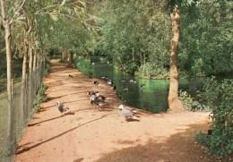 Postcard - Wildfowl Trust - Peakirk. SP.2699 - Birds