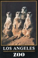 Postcard - Slender Tailed Meerkats At Greater Los Angeles Zoo. LAZ8-46 - Animals