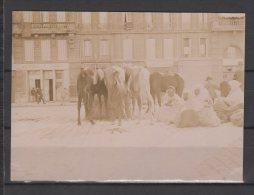 Arabes Arrivés Sur Le Port De Toulon Ou Marseille ( ????)  Avec Leurs Chevaux - Debut 1900 - Orte