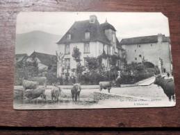 Carte Postale Ancienne : Vallée D´ Ossau : ARUDY , L´ Abreuvoir, Vaches - Arudy