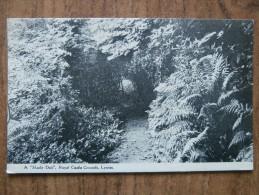 "40306 POSTCARD: DEVON: Lynton, A ""Shady Dell"", Royal Castle Grounds."