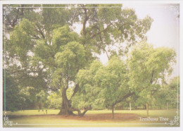 Postcard Tree Tembusu Singapore Botanic Gardens - Botanik