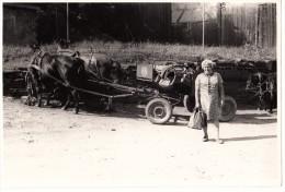 2 Pferden & Wagen Auf Luftbanden - Bauernhof ? - Cars