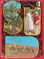 163985 / SUD ALGERIEN - Coat of arms , MUSIC MAN BOY , PALM , CAMEL - Algerie  Algeria
