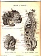 1890 Human Anatomy Intestines Antique Engraving Print - Old Paper