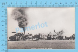 Steam Tractor ( Canada Threshing The Weat  In Action Blank Back ) Recto/verso - Tracteurs