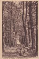 JURANCON                          sanatorium des pyrenees                                   une allee de chenes