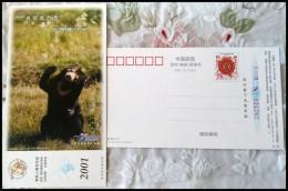 Black Bear - Bears