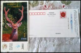 Deer - Stamps