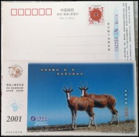 Wildebeest - Stamps
