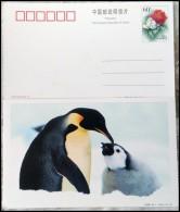 Penguin - Penguins