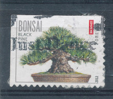 Flore - Bonzai - Etats-Unis