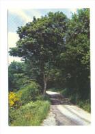 Parc Naturel Régional Du Morvan, Route Du Mont Beuvray - Bourgogne