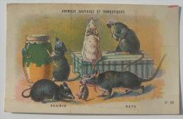 F. NATHAN : IMAGE BON POINT CHROMO ANIMAUX SAUVAGES ET DOMESTIQUES N° 58 SOURIS , RATS - Animales